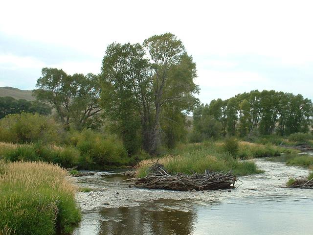 Laramie River